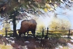 SarahGrahamArt.com-Just a Longhorn in His Spot of Shade